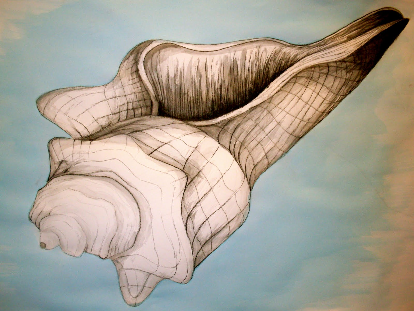 Contour Line Drawing Shell : Shell line drawings