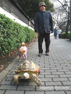 Walking the turtle, Tokyo.