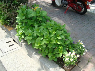 Guerrilla Gardening In Japan