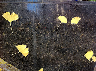 Ginkgo leaves in Tokyo