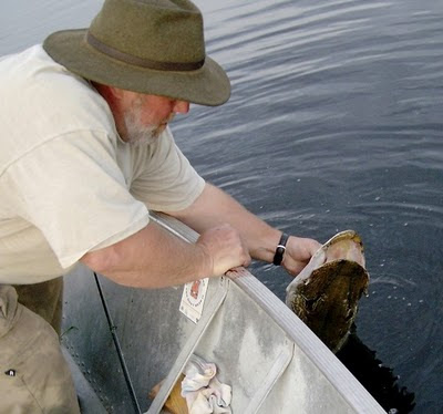 Tony releasing big Red Lake pike