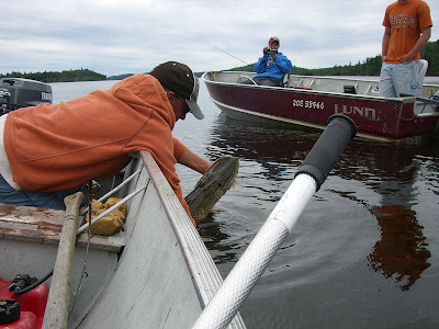 Giant northern pike is released