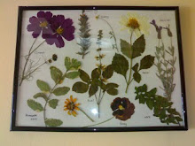 How to Make a Botanical Picture