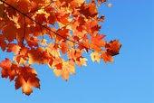 [Fall+Sky]