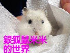 銀狐鼠米米的世界