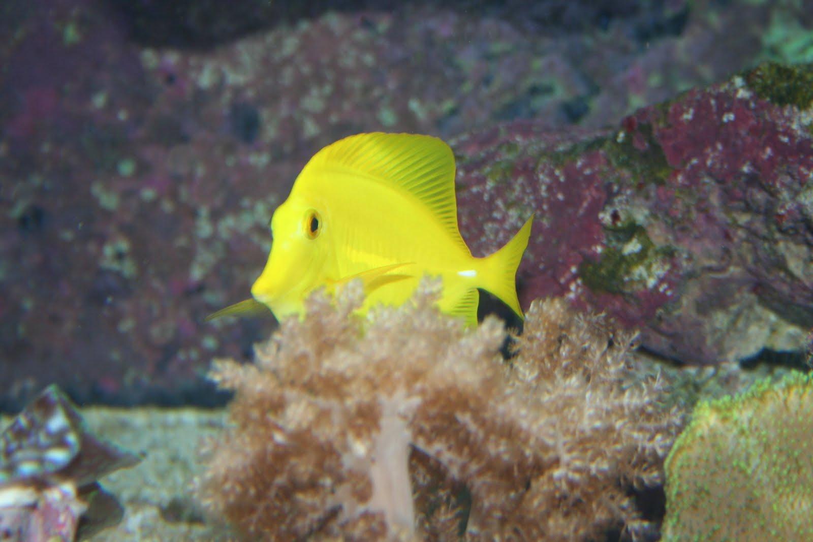Tennessee Aquarium Blog Warm Up Inside Tennessee