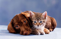 Cat and dog: awww