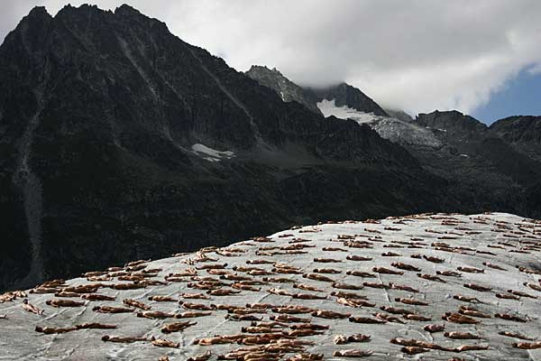 tunick8 going into Glacier Bay on