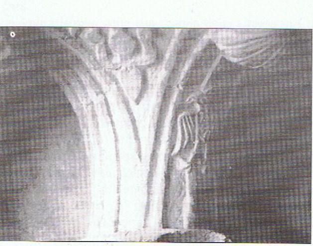 Stemmicapitello  Abbazia Avril de Saint genis identico a quello di federico II di Casamari