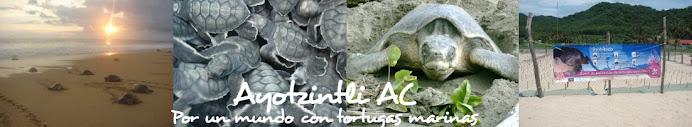 Ayotzintli AC: Por un mundo con tortugas marinas