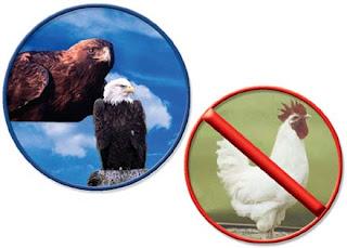 eagles+vs+chicken