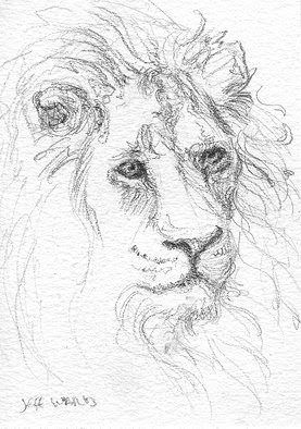 ACEO lion sketch
