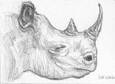 ACEO rhinocerous sketch