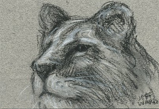 lioness sketch aceo
