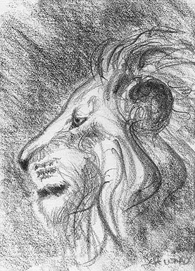 Lion Profile Sketch ACEO