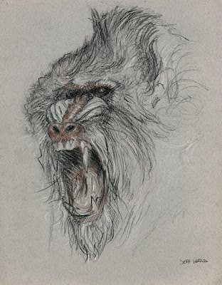 mandrill monkey sketch