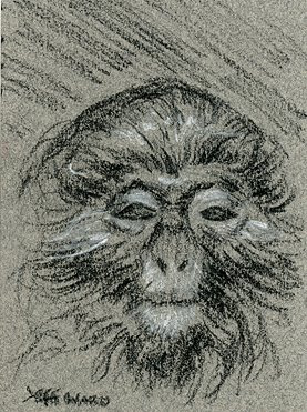 moustached monkey sketch