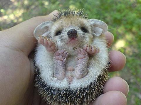 P O T A G E R: Just because........A baby porcupine