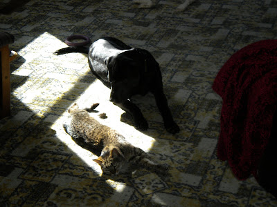 Simba stretched out and Dagan in his sliver of sun light next to her, head down and relaxed