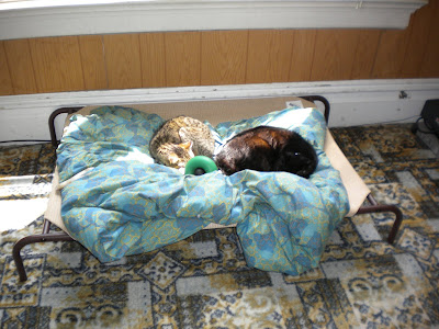 Simba and Yogi curled up together on the sling bed on top of the blanket with Dagan's Goughnut in between them
