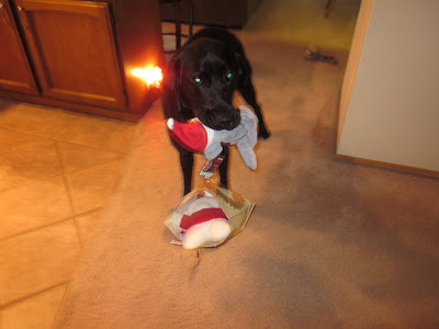 Dagan with a gift bag and stuffed dog toy in his mouth
