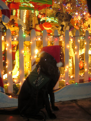 Dagan sitting, in his Santa hat, at an insanely lit up and decorated Christmas house