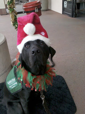 Dagan in his Santa hat and Christmas collar at the kettle