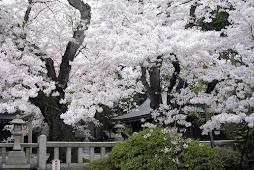 japonia 6