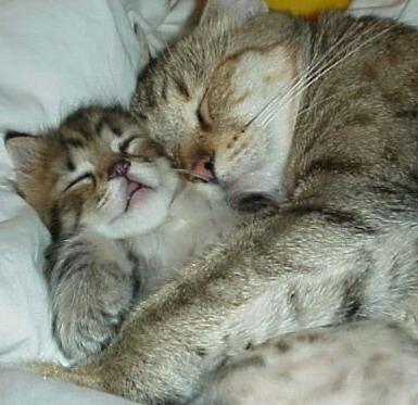banyak jenis kucing di dunia kucing persia merupakan sa