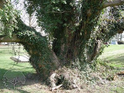 Tree with Burrow