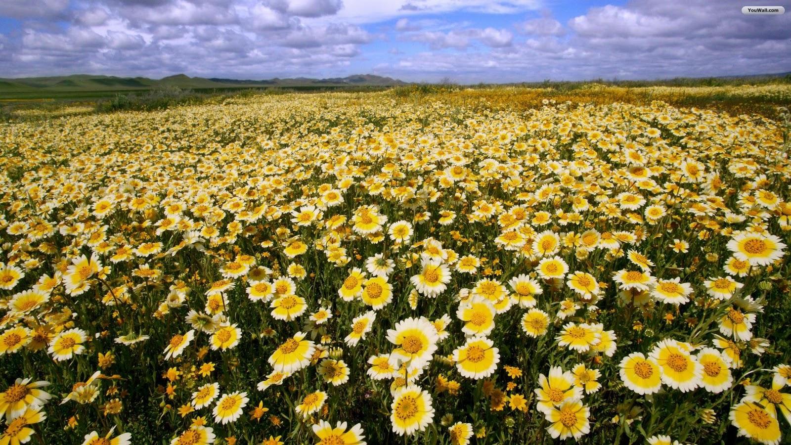 http://1.bp.blogspot.com/_UdUDH_BCTj4/TMyS_7UyO0I/AAAAAAAAAGM/vZeC-lufDe8/s1600/flowers_wallpaper_ecb33.jpg