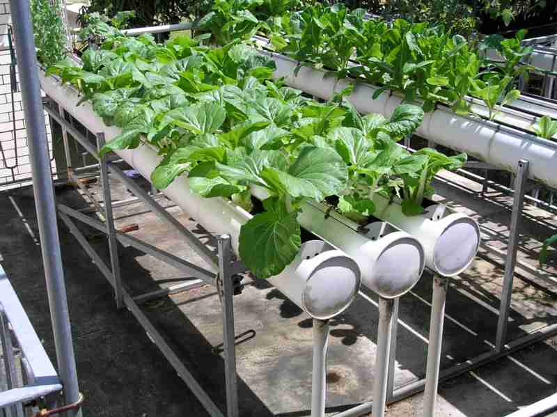 Backyard Nursery System : not only are these hydroponic vegetable gardens putting healthy