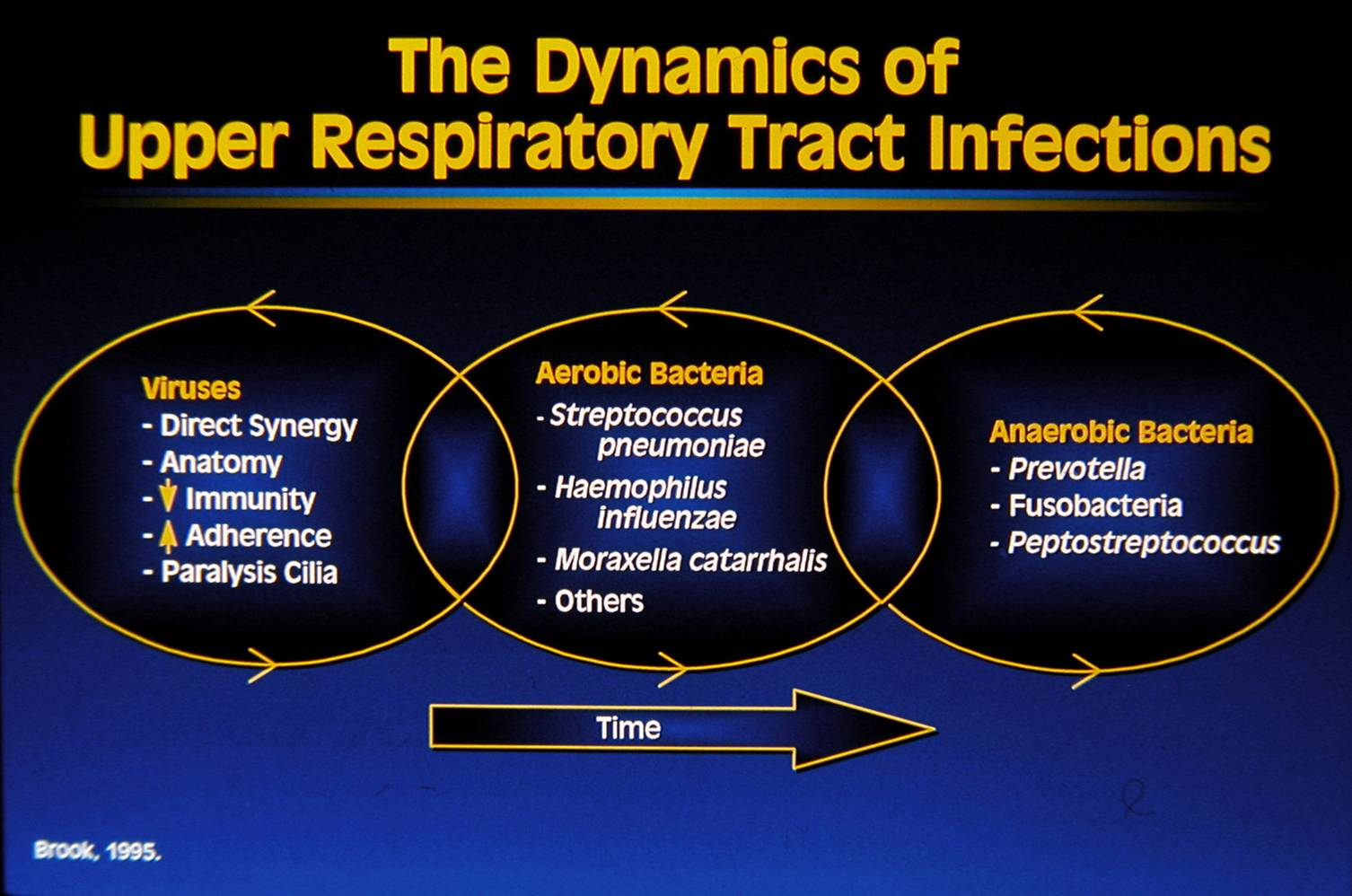Bacteria cause upper respiratory infection 68