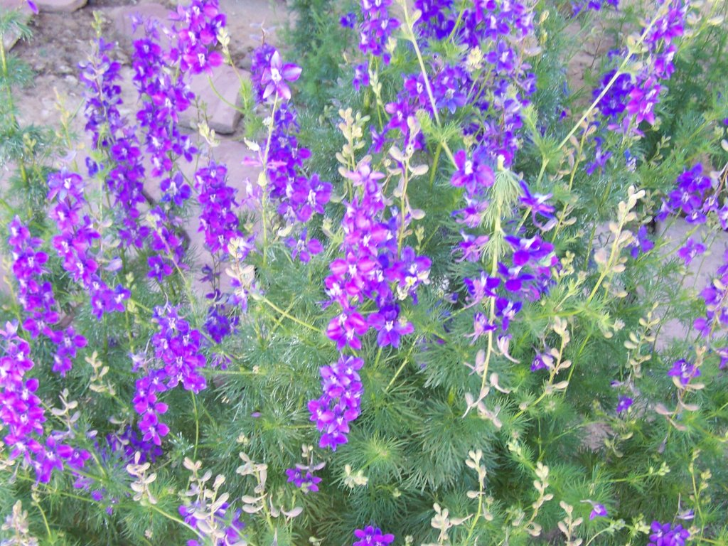 Garden flower bush with beautiful purple flowers