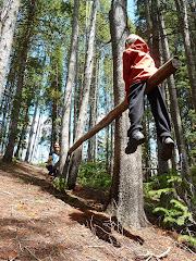 Treesaw