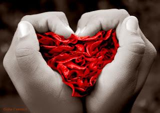 Foto mãos formando coração
