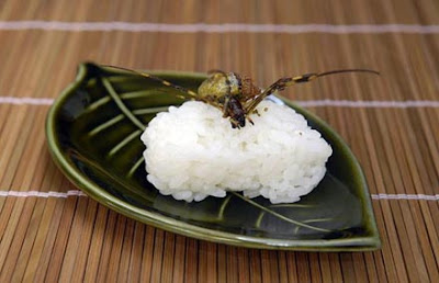 odd food weird food funny food funny pictures japanese culture cuisine