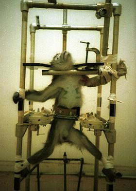 [280px-Silver-Spring-monkey.jpg]