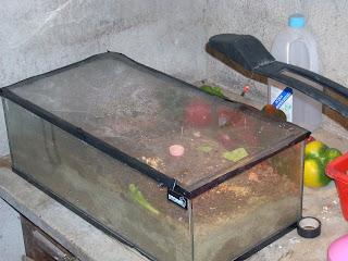 Le formiche di alby la teca for Contenitore per tartarughe