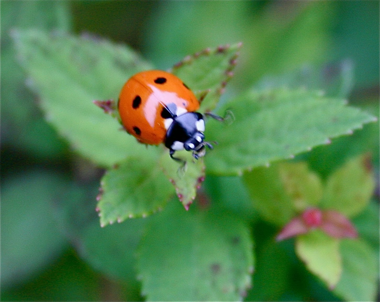 get rid of pesty insects naturally home stories a to z