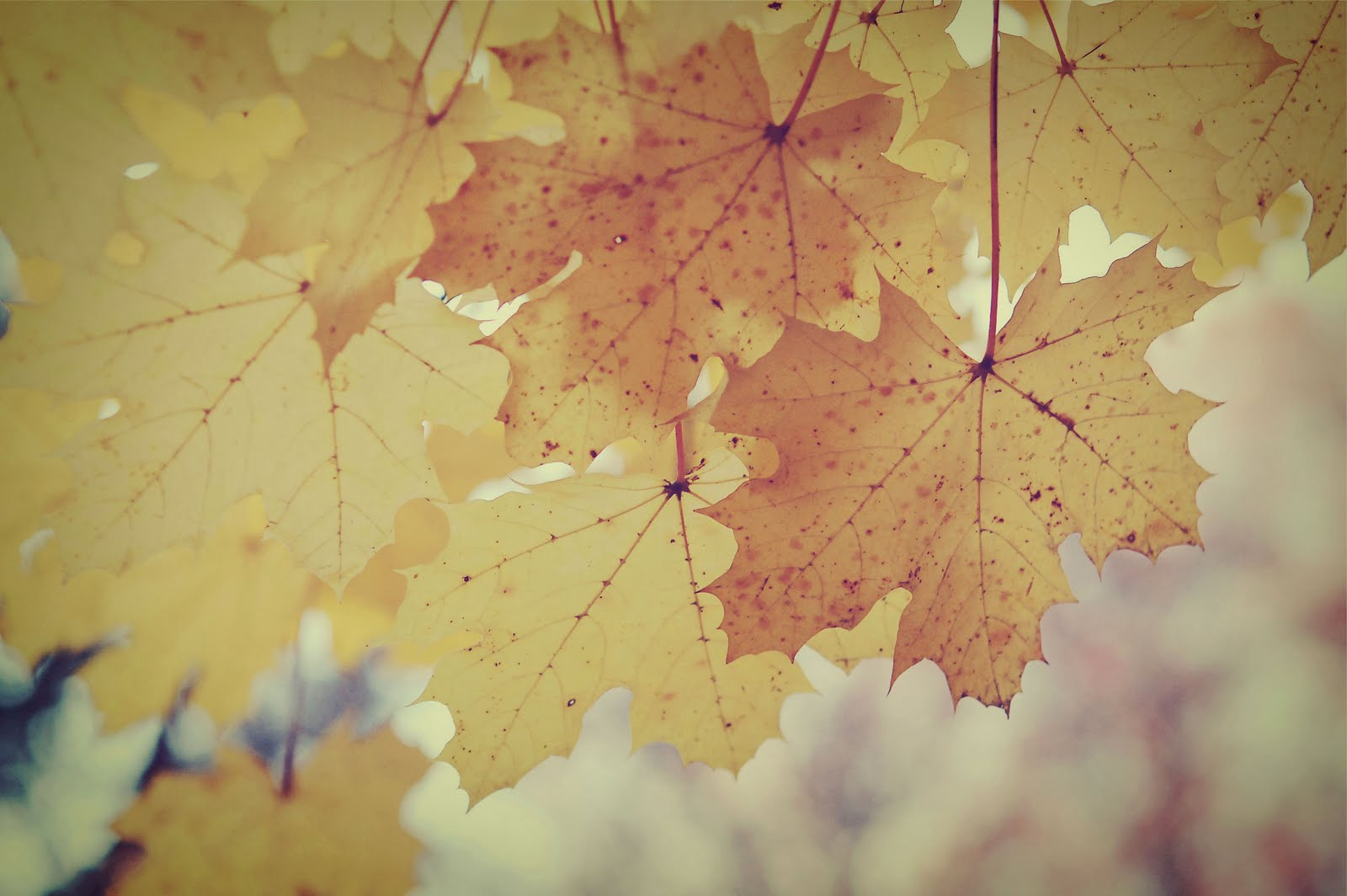 vintage fall backgrounds with - photo #3