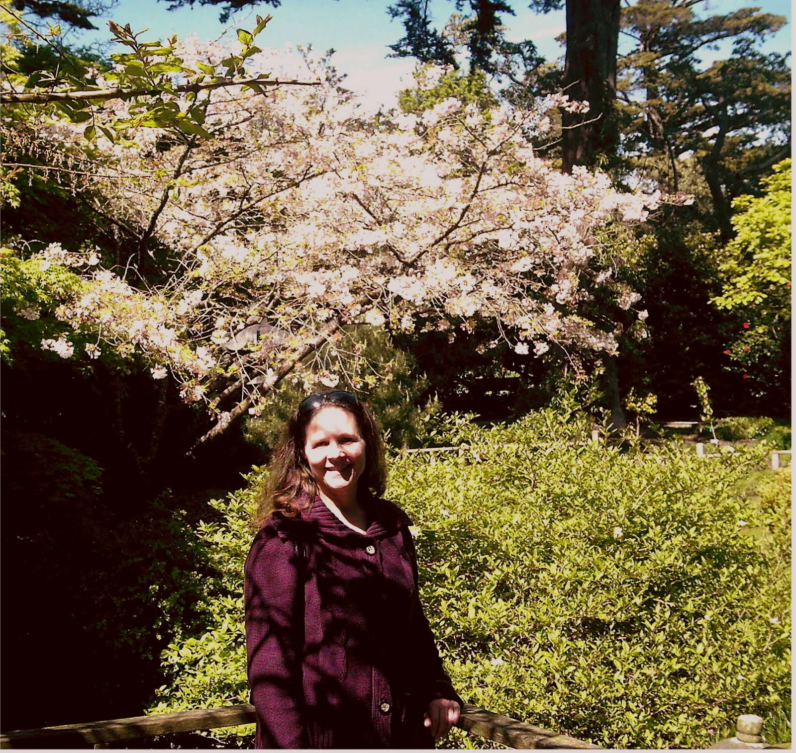 Cherry Blossoms in Golden Gate Park