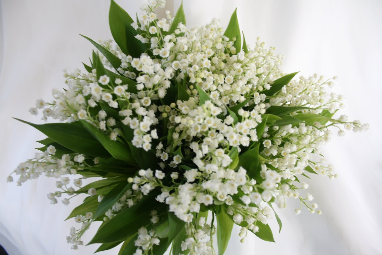Bridal Bouquet Plant Images : Floral news ga oooooh baby s breath
