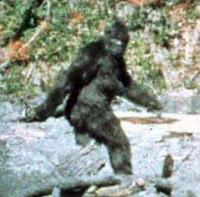 ساسكواتش أو ذو القدم الكبيرة كما تم التقاطه من فيلم باترسون عام 1967