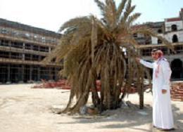 نخلة مسكونة بالجن وسط مدينة جدة السعودية