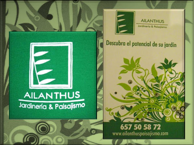 AILANTHUS