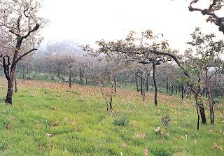 Dok Kra Chiew or Dok Bua Sawan fields
