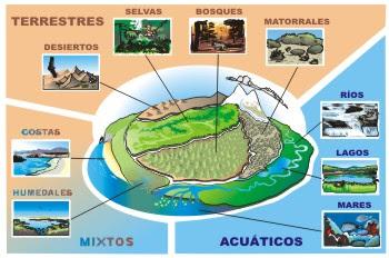 El medio ambiente clasificacion de los ecosistemas for Cuales son las caracteristicas de un mural