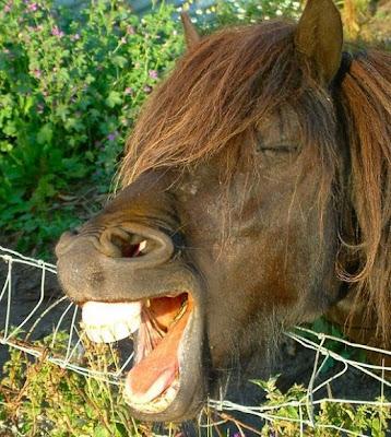 عکس: وقتی نیش اسب باز میشه