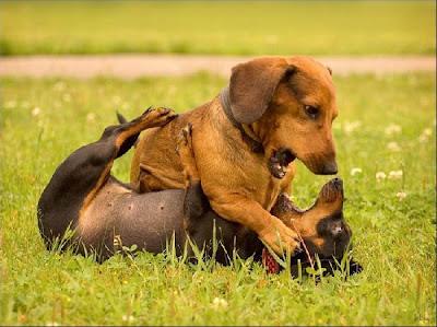 حیوانات دوست داشتنی